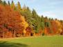 Herbstspaziergang mit Terra 2011